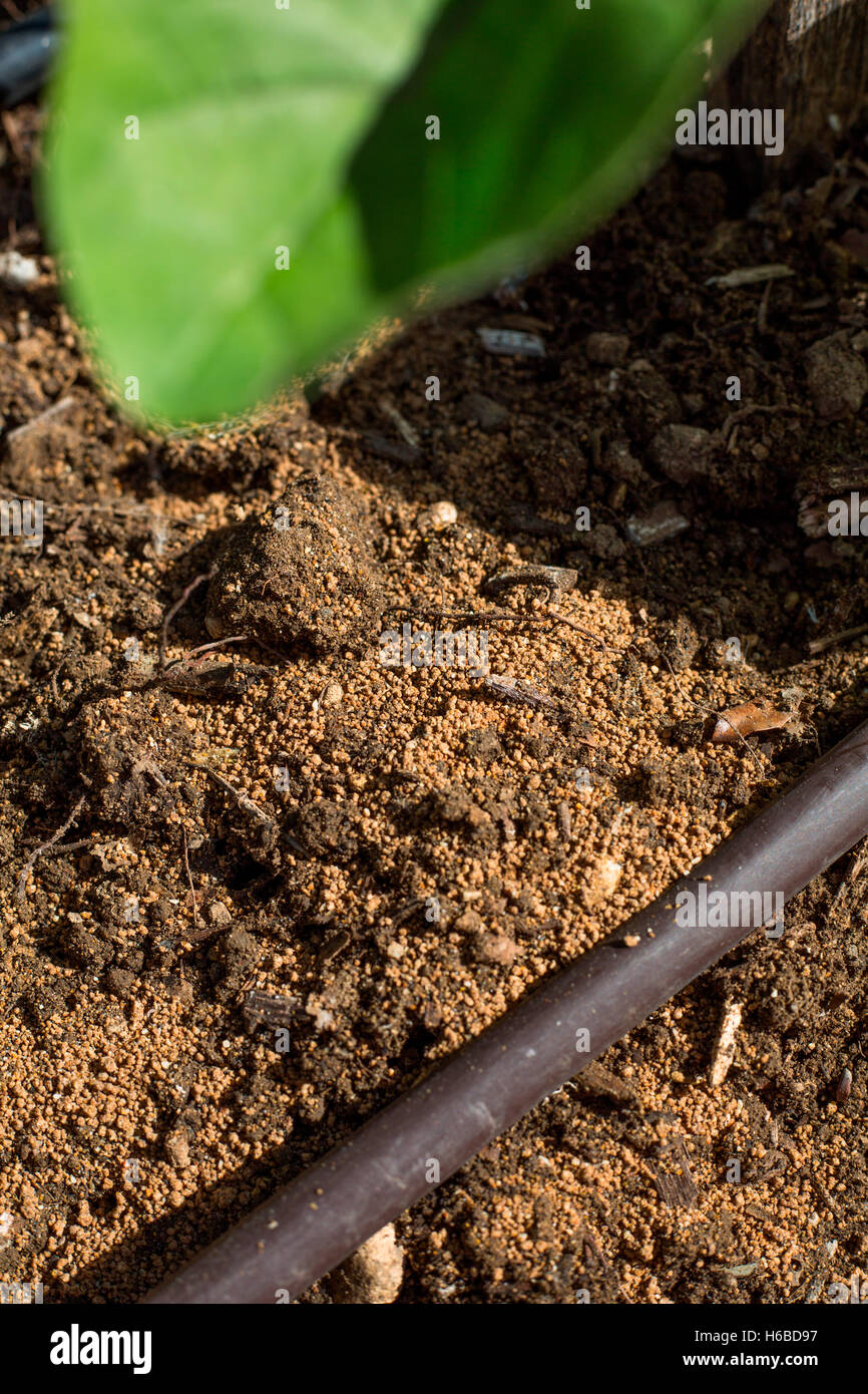 Fertilizing The Vegetable Garden Stock Photos & Fertilizing The ...