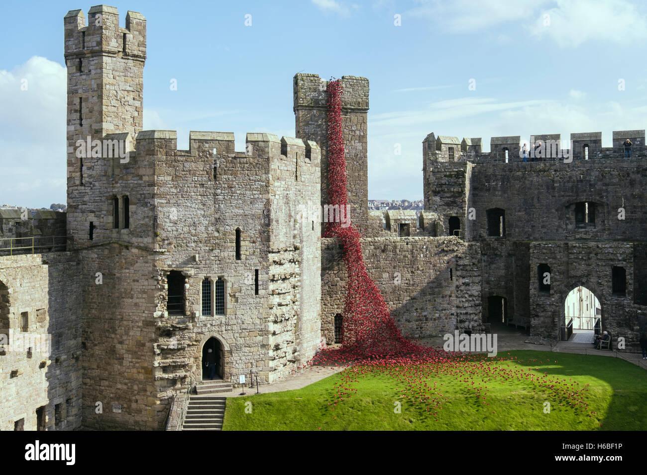 Weeping Window art sculpture of ceramic red poppies display in Caernarfon castle walls. Caernarfon Gwynedd North - Stock Image