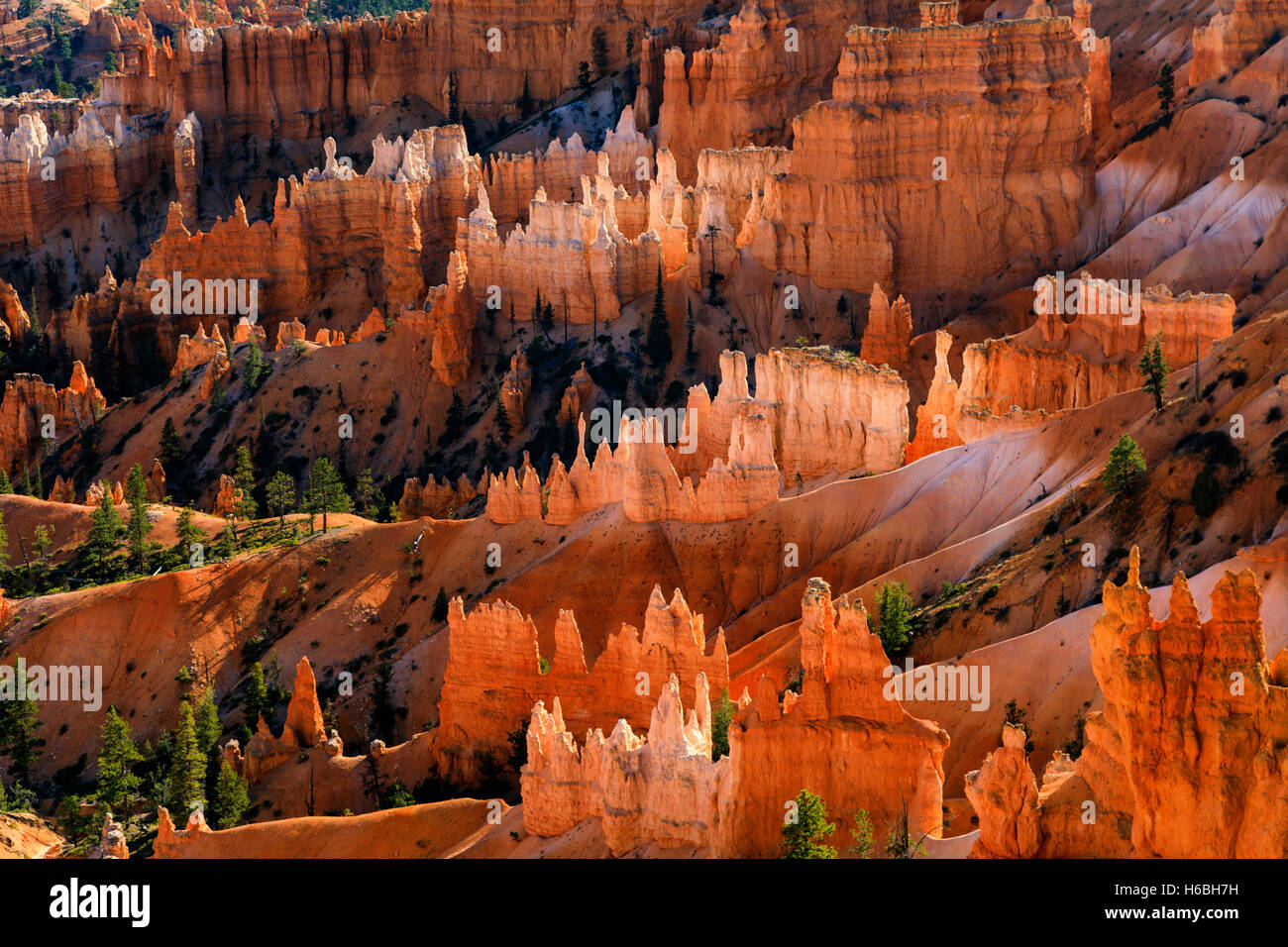 The red rock (and white rock) formations glow along  the Queens Garden Trail  in Bryce Canyon National Park Utah - Stock Image