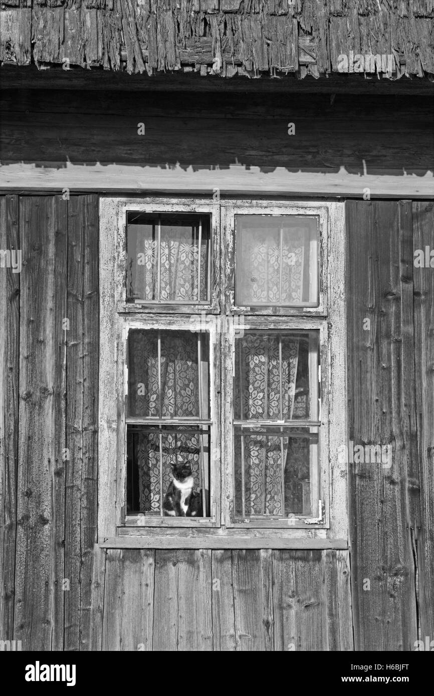 ZDIAR, SLOVAKIA - SEPTEMBER 13, 2016: The cat and face in old window of blockhouse. - Stock Image