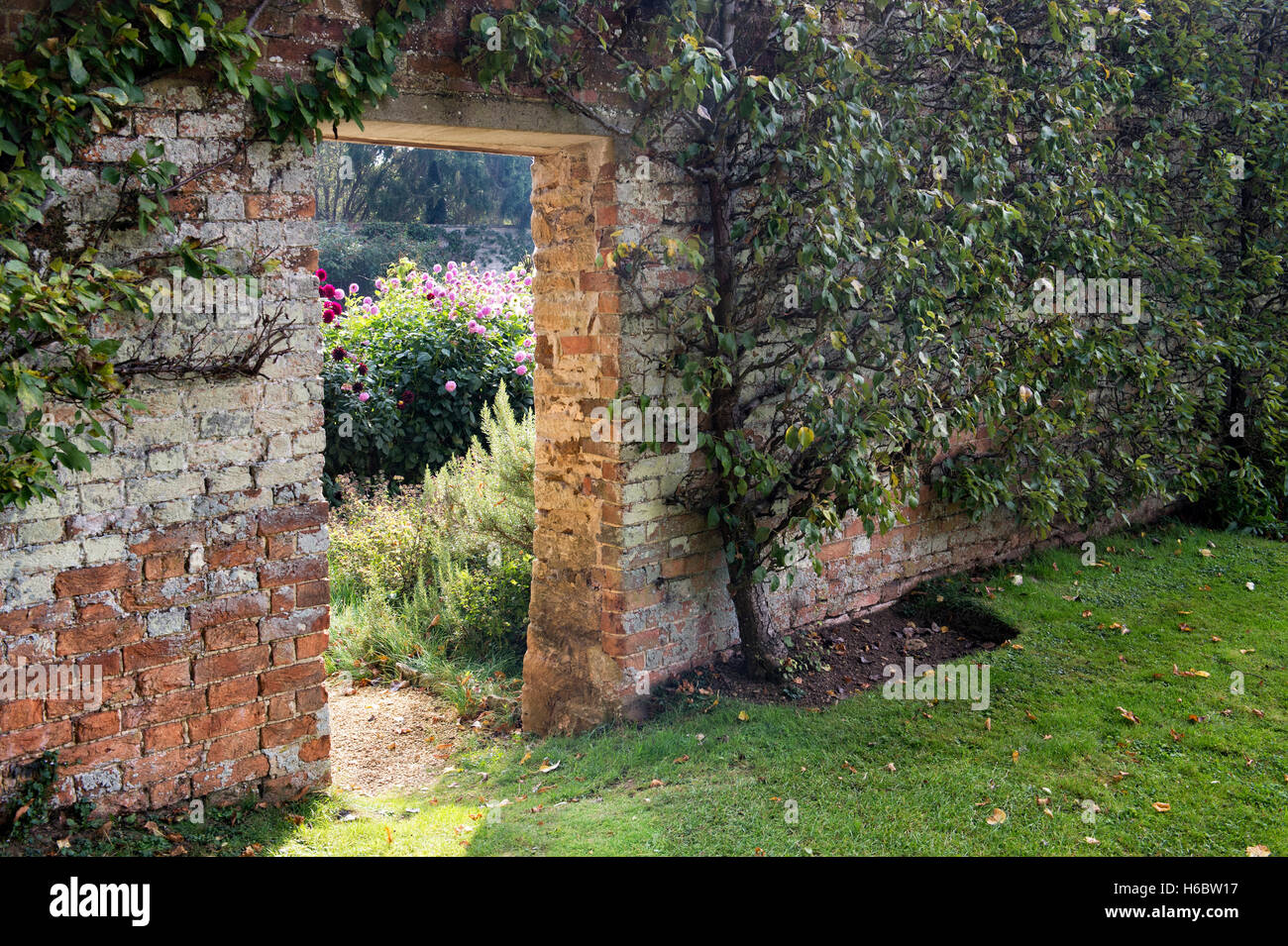 Fan trained fruit tree, doorway and flower garden in autumn in Rousham House walled garden. Oxfordshire, England - Stock Image