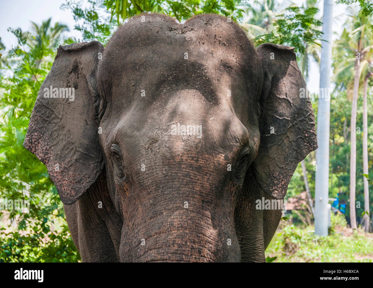 Elephant Sanctuary Kerala Stock Photos & Elephant ...