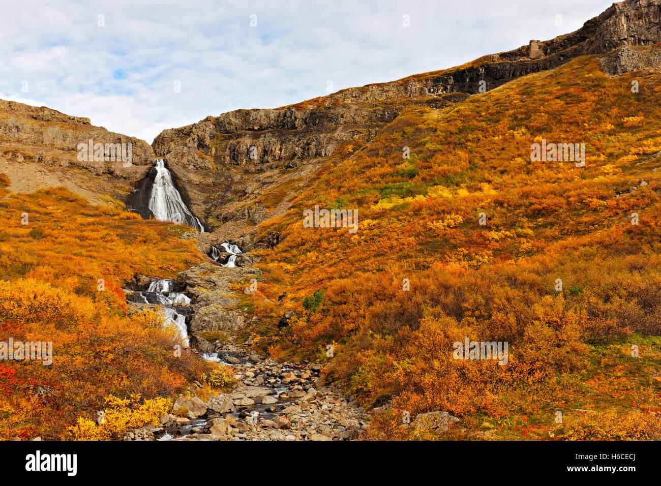Waterfall, Westfjörds, Iceland, North Atlantic, Europe - Stock Image