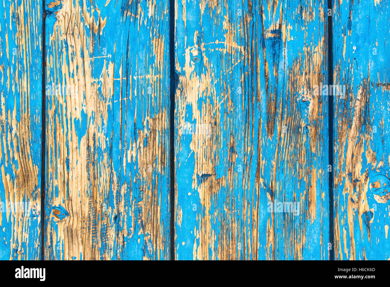 Rustic weathered planks with blue paint peeling off the surface, detailed background of wooden boards - Stock Image