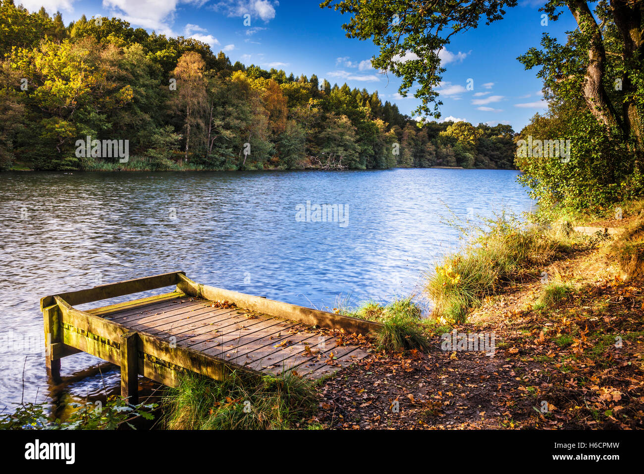 Cannop Ponds in the Forest of Dean, Gloucestershire. - Stock Image