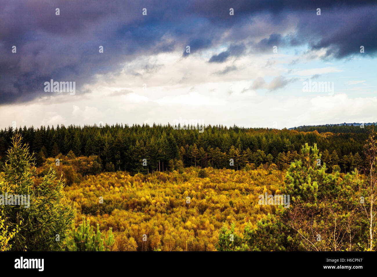 Autumn in the Forest of Dean, Gloucestershire from New Fancy View. - Stock Image
