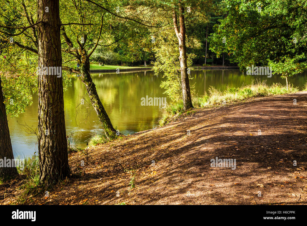 Mallards Pike in the Forest of Dean, Gloucestershire. Stock Photo