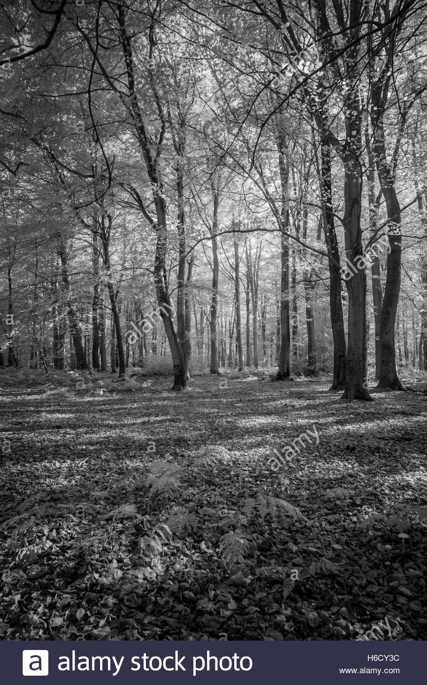 Infra red study of an Autumal woodland floor - Stock Image