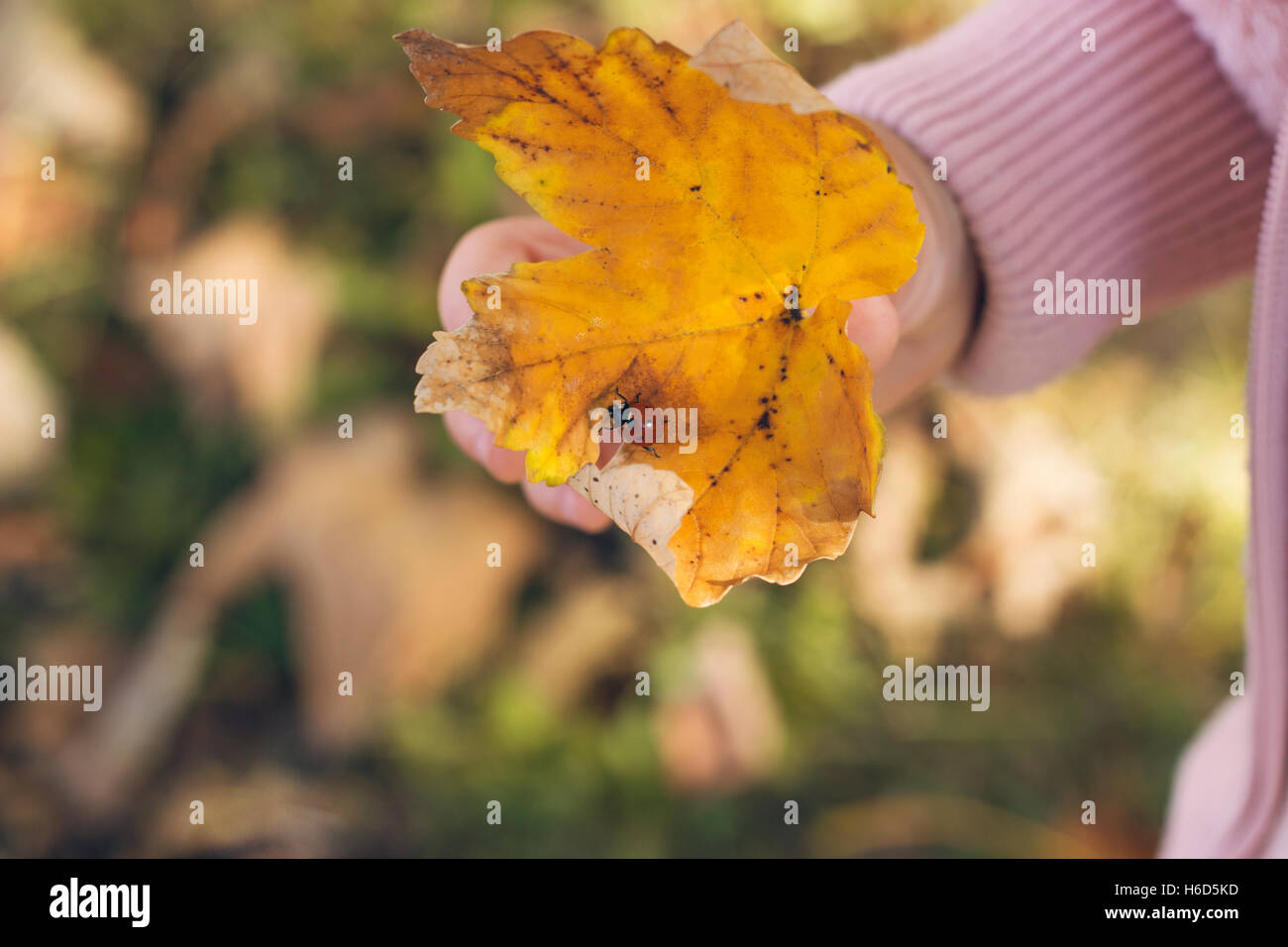 Autumn in the park; little girl holding a yellow leaf with a ladybug on it Stock Photo