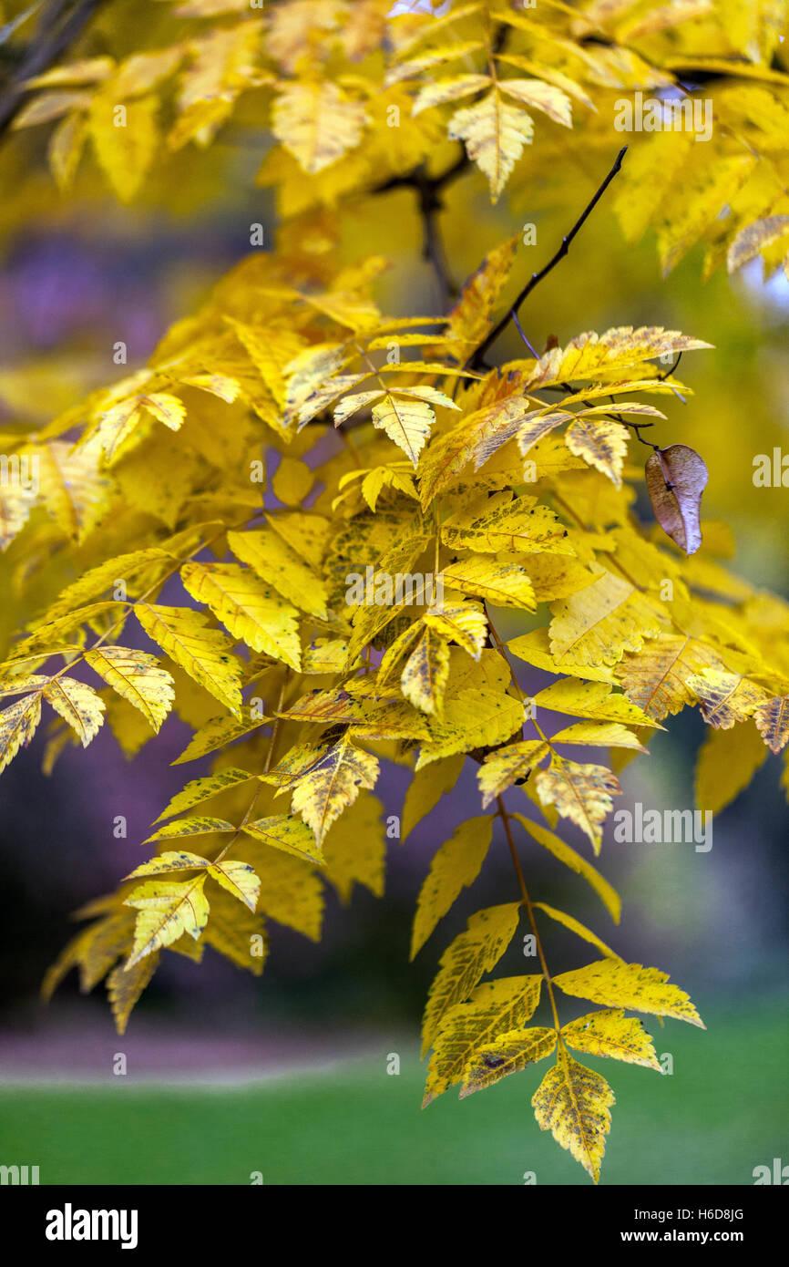 Garden almond - golden rain 4