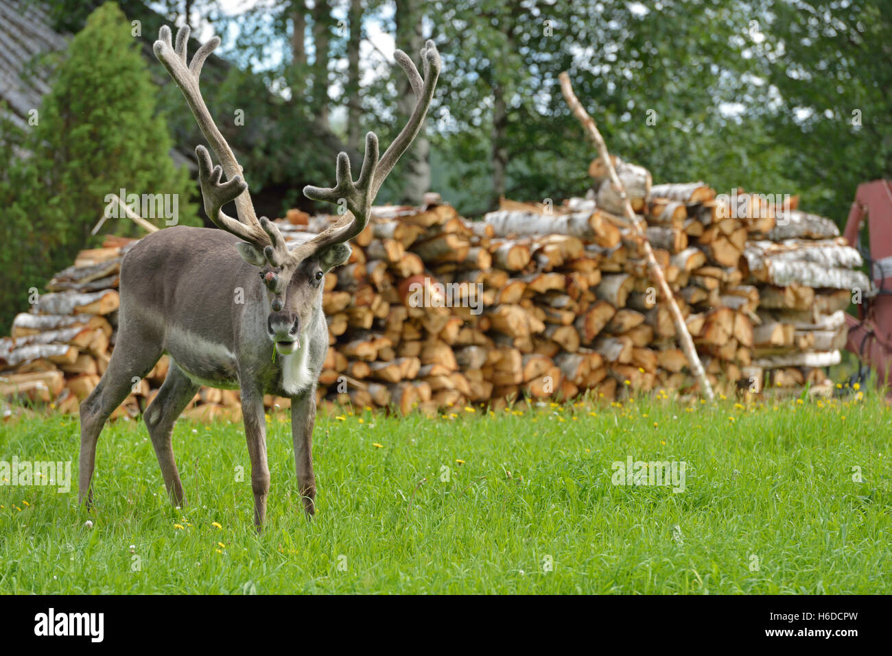 Antlers Log Stock Photos Amp Antlers Log Stock Images Alamy