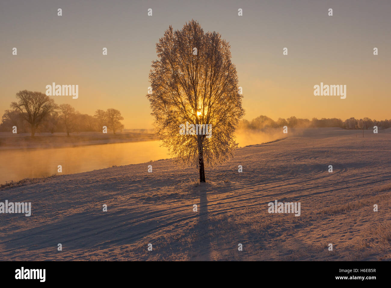 Fog at the Elbe river near Torgau during a winter sunrise. Focus on tree Stock Photo