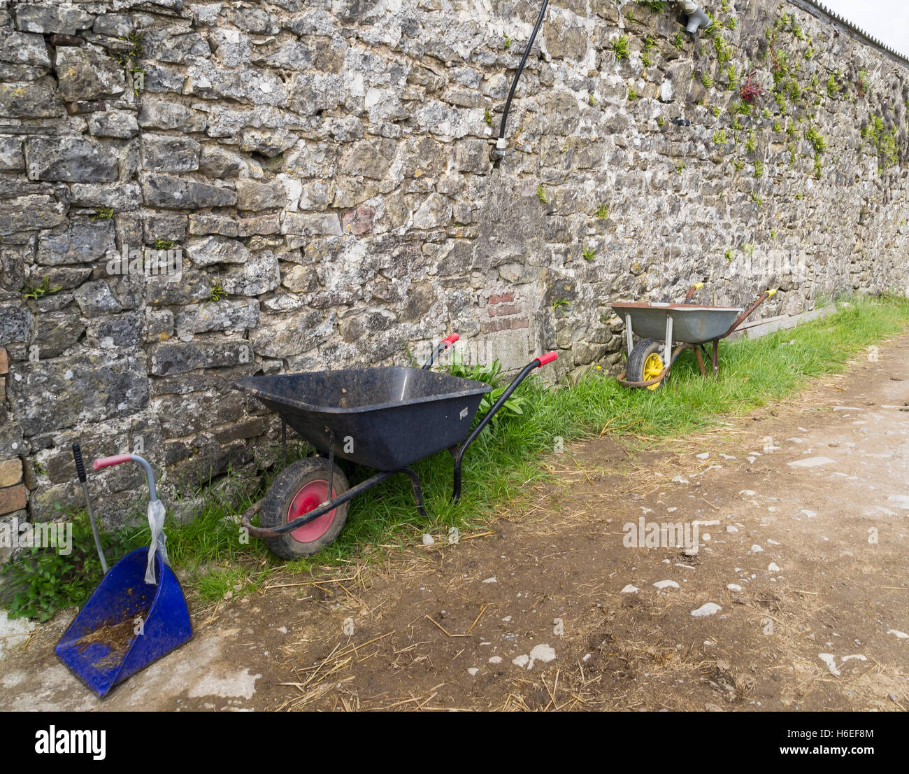wheelbarrows by rural stone wall outside stables - Stock Image