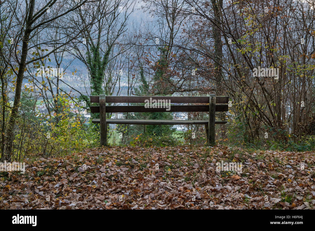 A lonely bench in the forest during fall - Stock Image