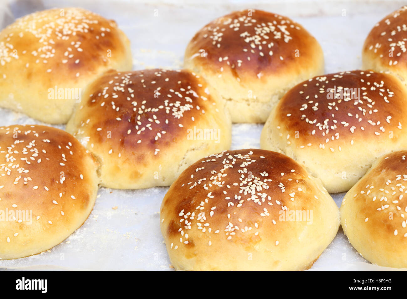 Freshly made sesame seed topped burger buns, fresh from the oven and still joined together on the baking tray - Stock Image