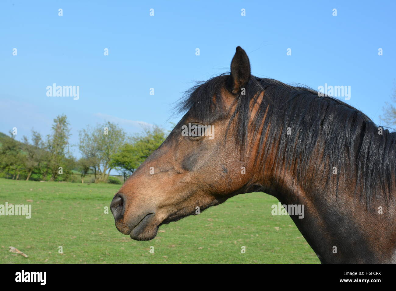 Side View Of Horse Head Stock Photo Alamy