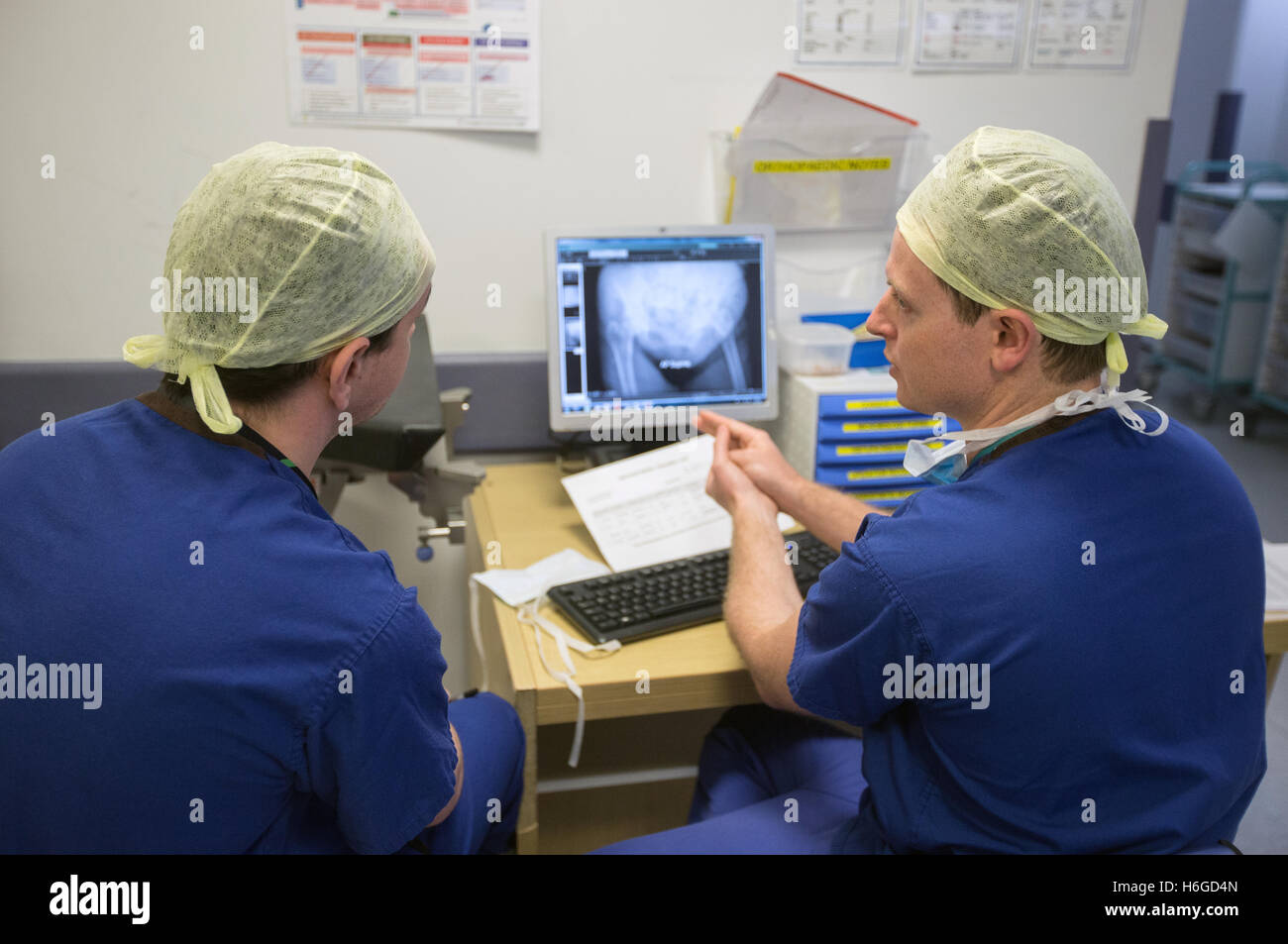 Two doctors discussing a patient X Ray on the screen showing a broken leg.They discuss images and notes on the mobile - Stock Image
