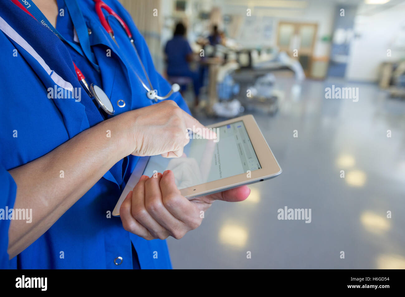 A doctor on a ward checks a patients' records on an Ipad - Stock Image