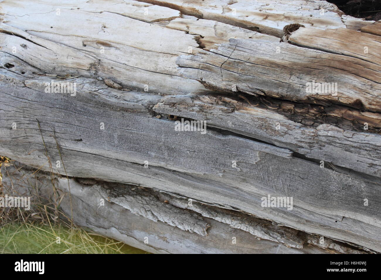 deatailed image of the texture of an old oak tree's bark - Stock Image