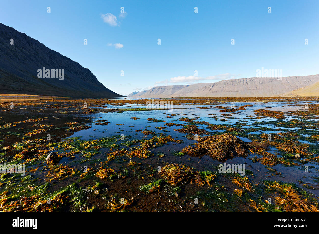 Dynjandi river foreshore,  Arnarfjord, Westfjords, Iceland, North Atlantic, Europe - Stock Image