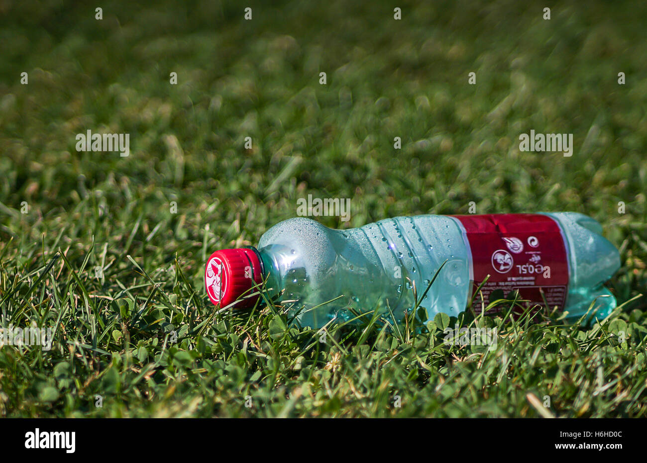 Plastic bottle on the grass - Stock Image