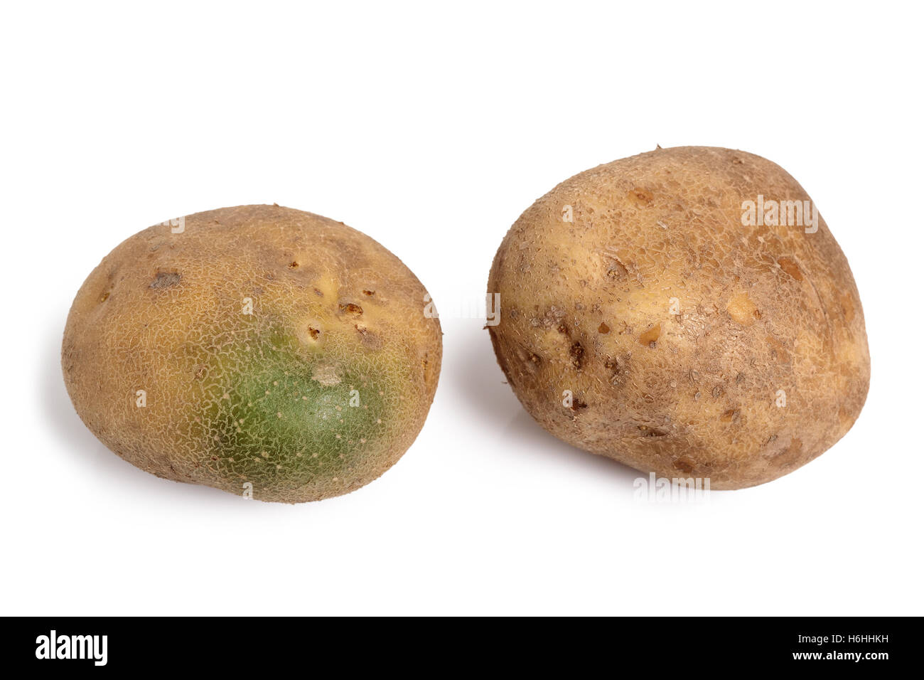Raw unpeeled potato with green skin  Isolated on a white
