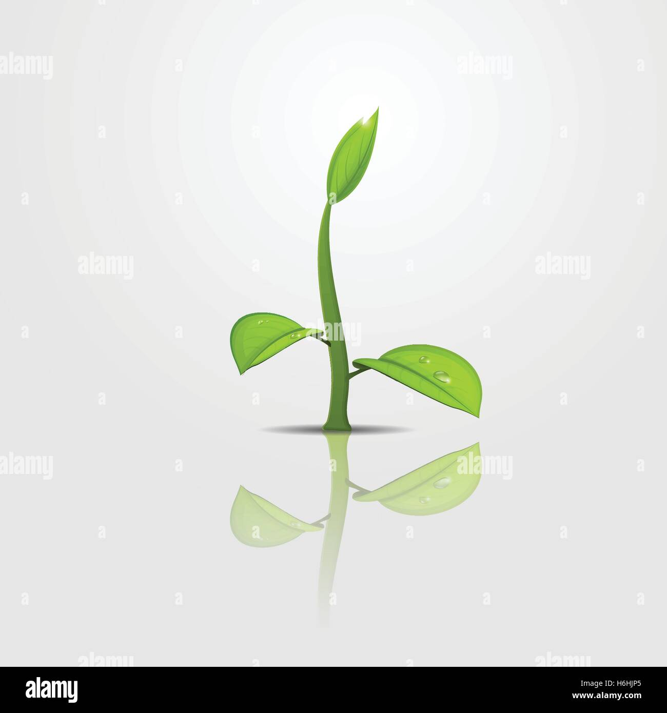 Green sprout with young leaves and water drop on reflecting surface - Stock Vector