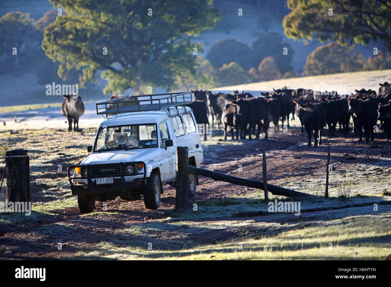 4WD vehicle at farm in the Victorian High Country. Australia. - Stock Image