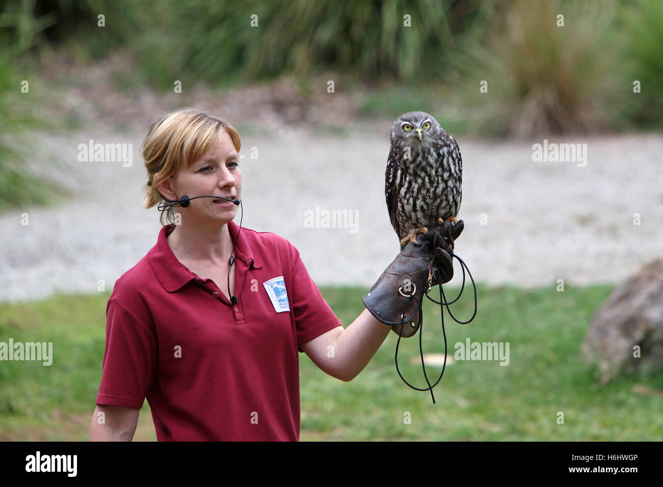 Birds Of Prey Show At Healesville Sanctuary Victoria Australia Stock Photo Alamy