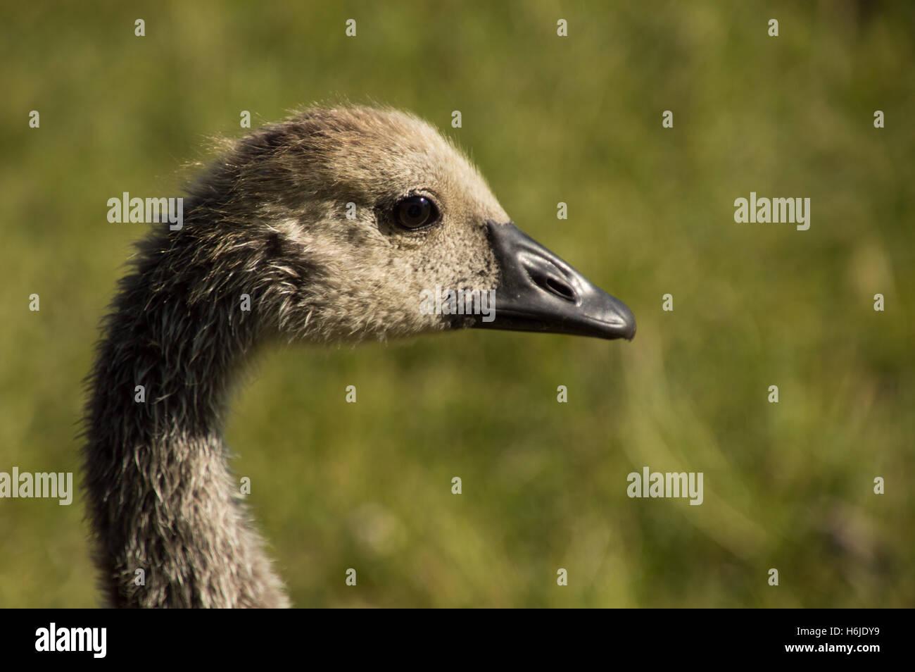 canada goose mulhouse