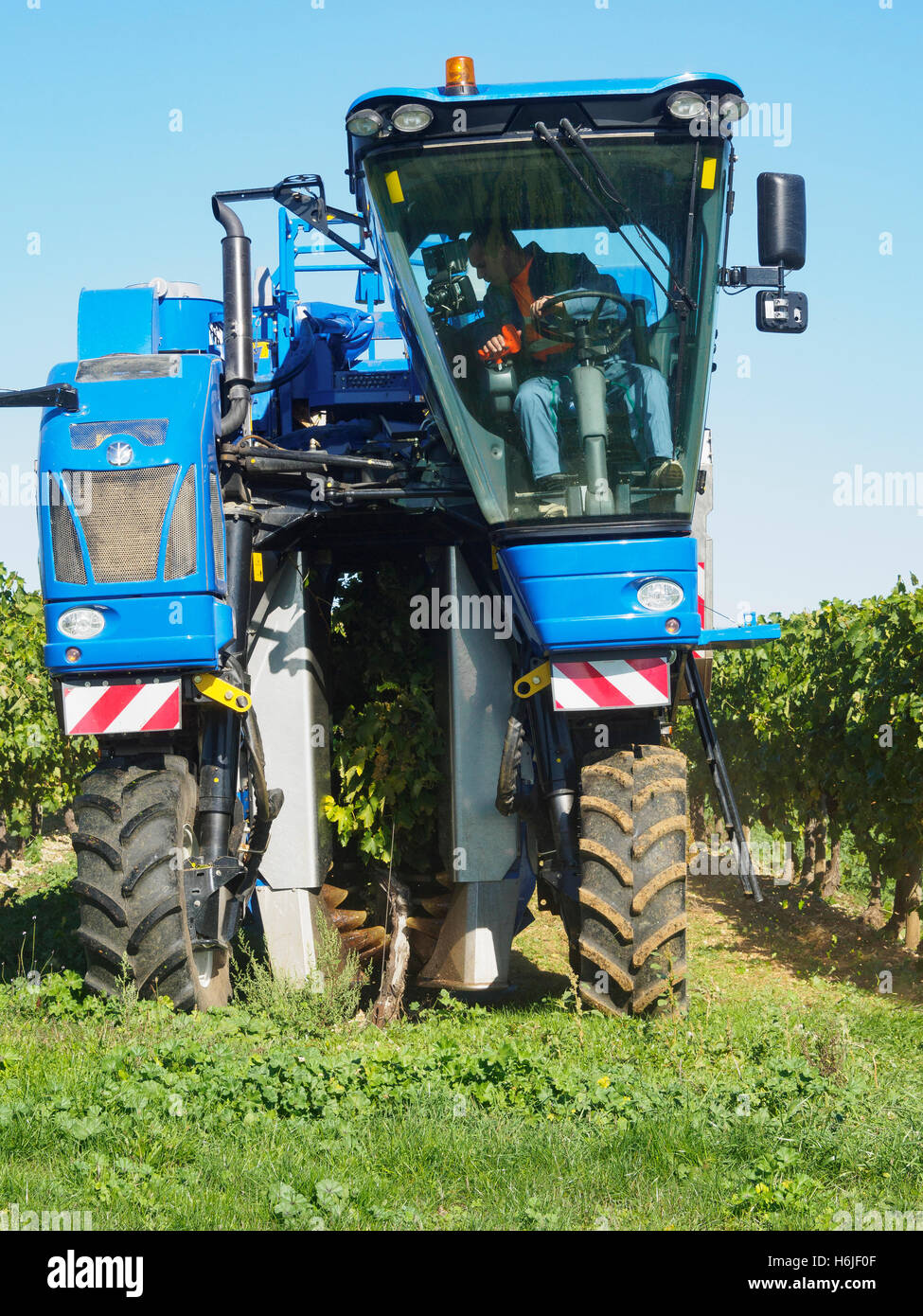 Grape Harvester Stock Photos Grape Harvester Stock Images