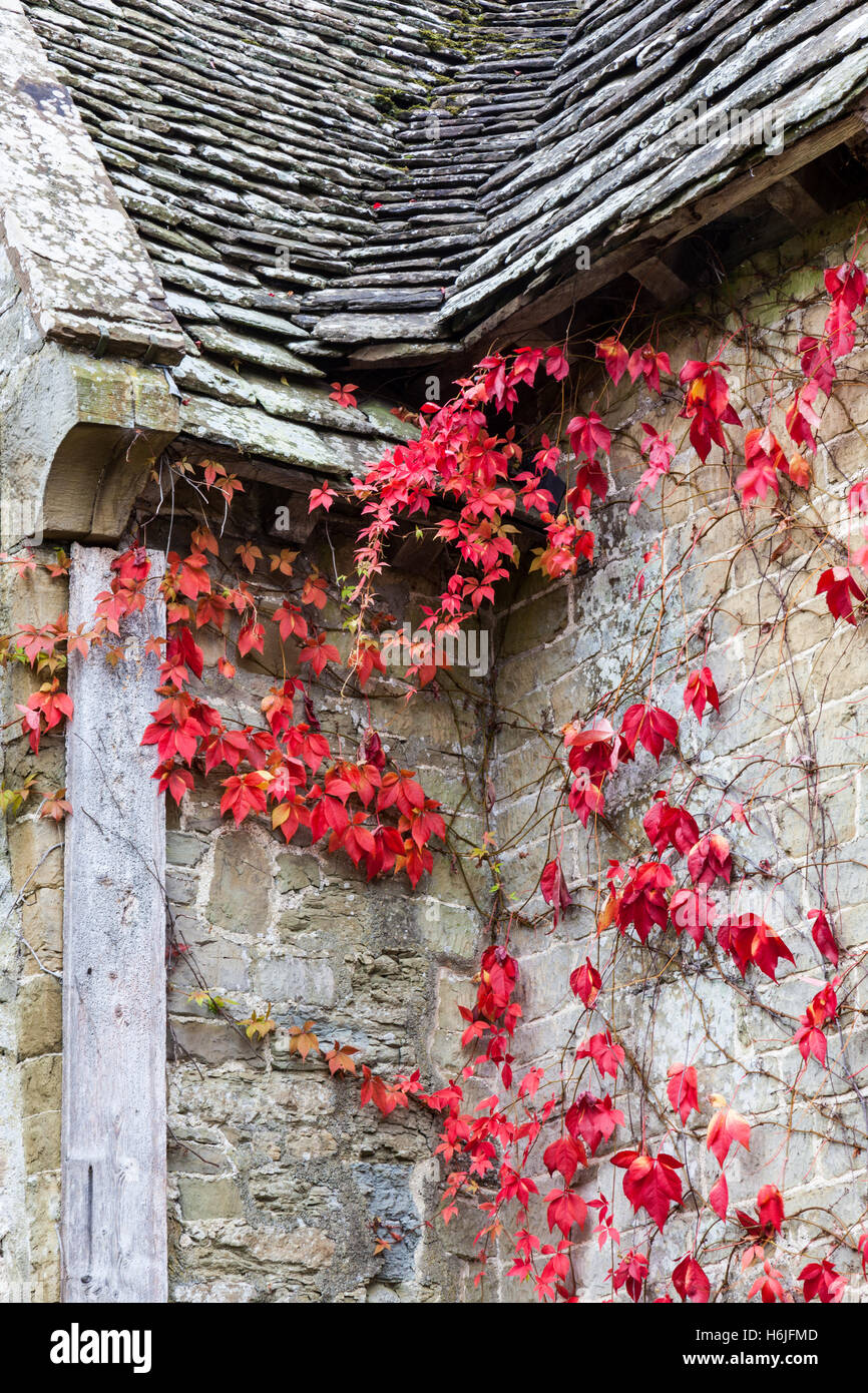 Red leaves against the fortified manor house of Stokesay Castle, near Craven Arms, Shropshire, England, UK - Stock Image