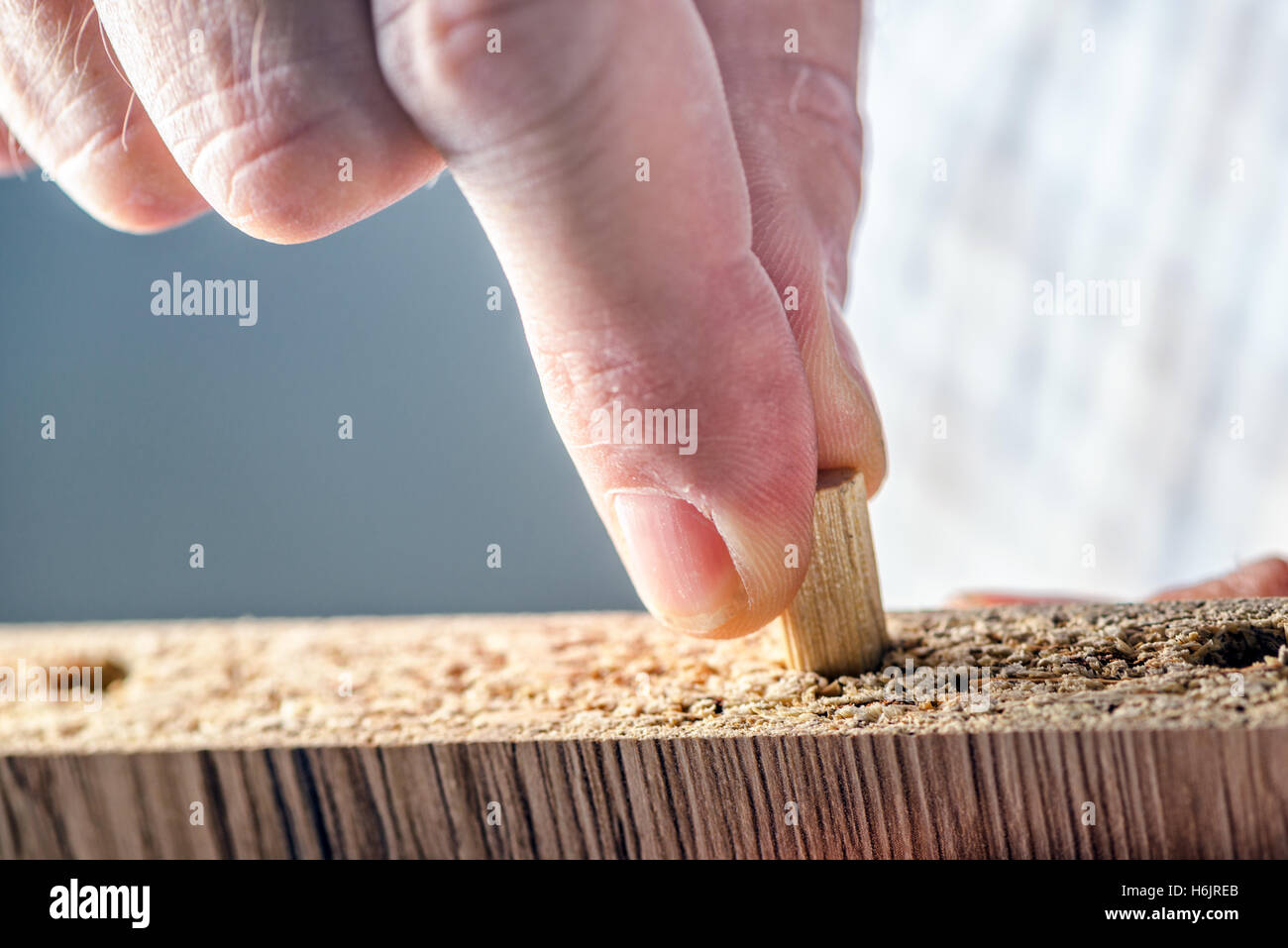 Man assembling furniture at home, male hand with wooden dowel pins and plywood board - Stock Image