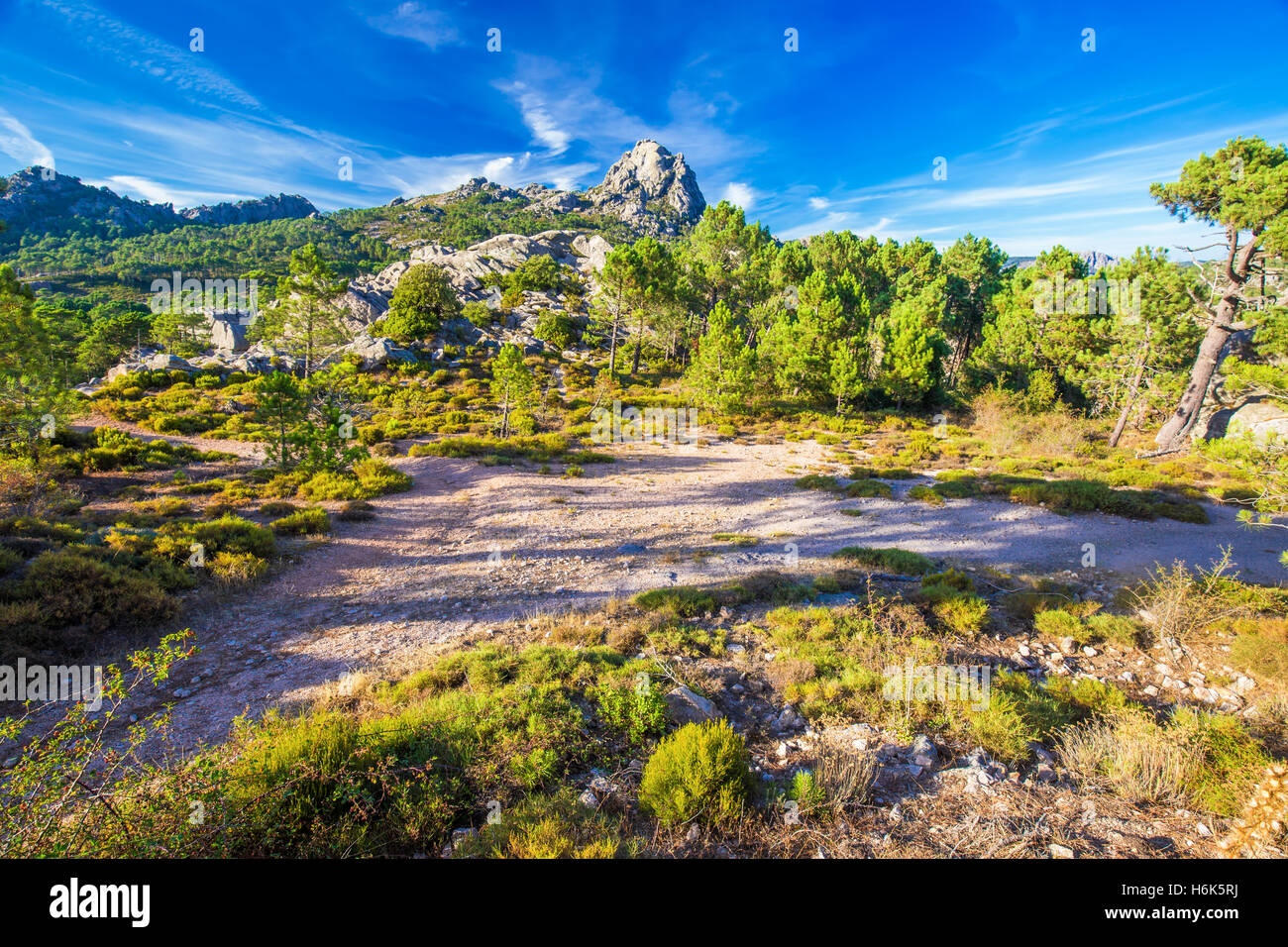 Pine trees in Col de Bavella mountains, Corsica island, France, Europe. - Stock Image