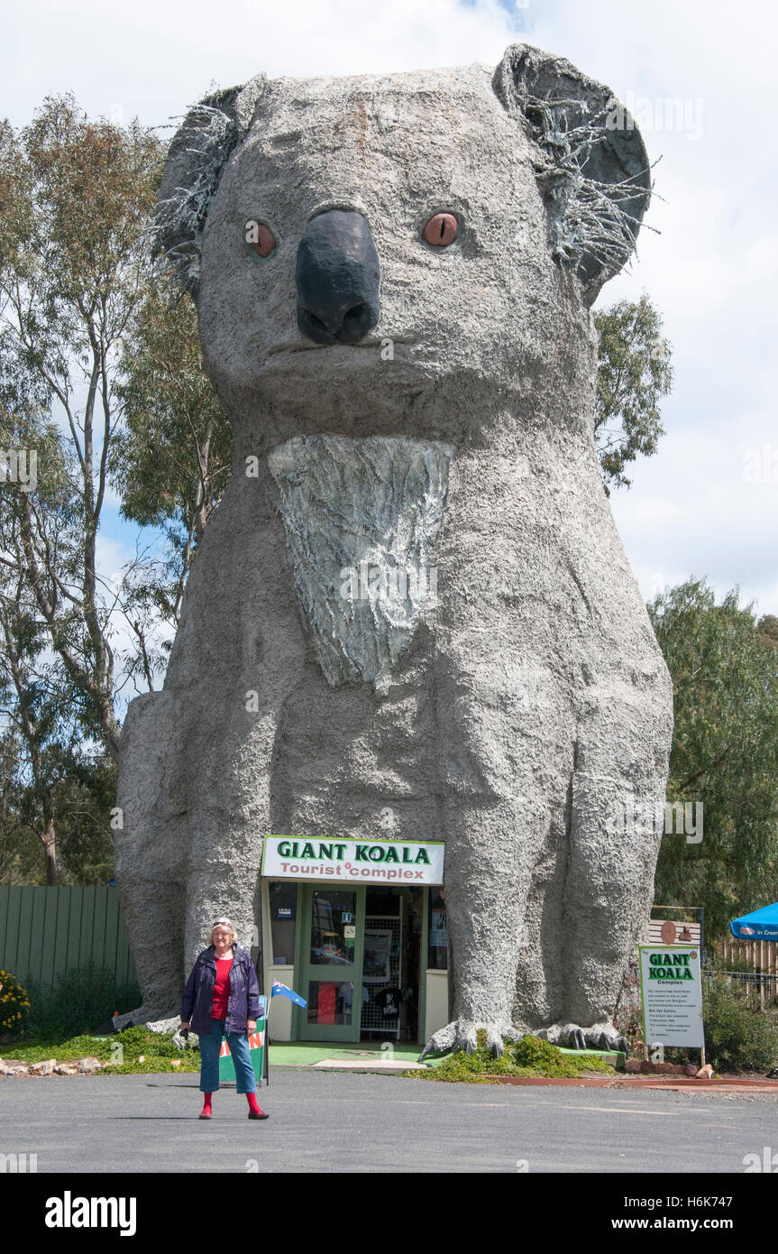 Giant Koala at Dadswells Bridge, western Victoria, Australia - Stock Image
