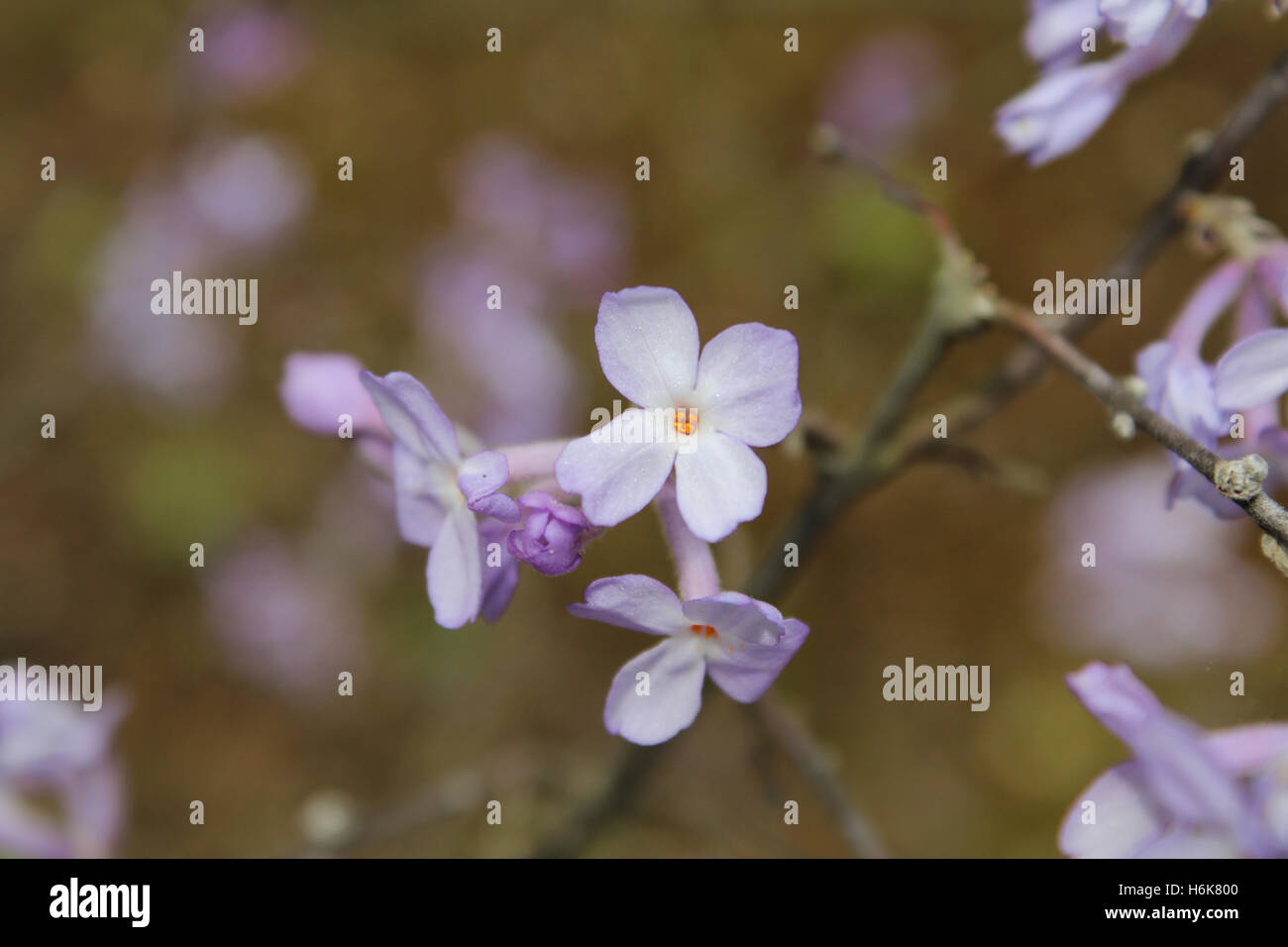 White flower with purple center stock photos white flower with focus on center of the small white purple flower in springtime stock image mightylinksfo