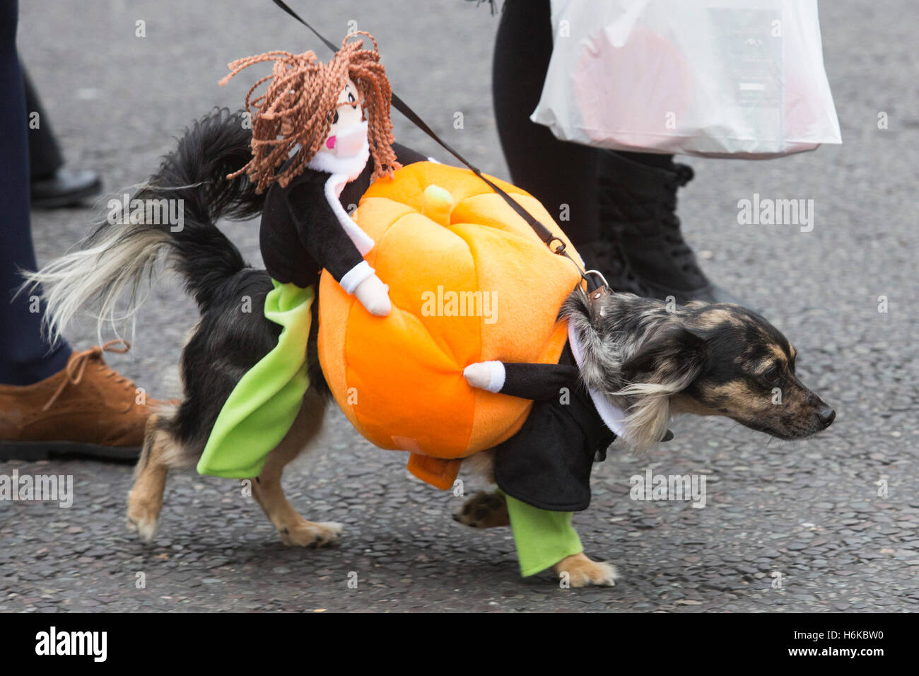 dogs in spooky and scary halloween costumes gathered with their owners at the spaniards inn in hampstead to set off on a halloween dog walk organised by
