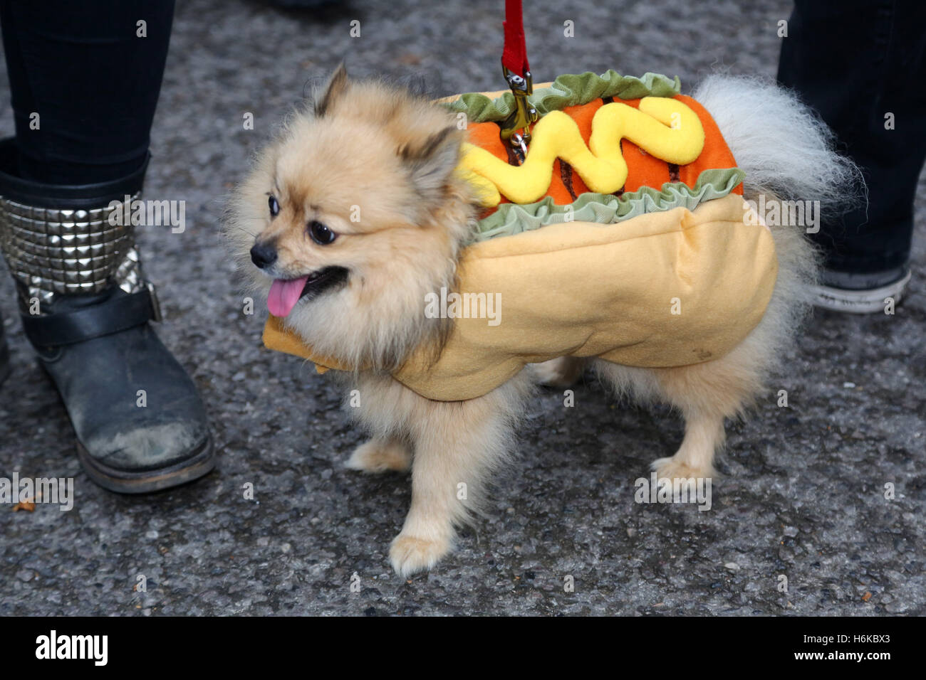 London UK. 30th October 2016. Dogs dressed up in Halloween fancy dress costumes for the All Dogs Matter Halloween Dog Walk to raise funds for the charity ... & London UK. 30th October 2016. Dogs dressed up in Halloween fancy ...
