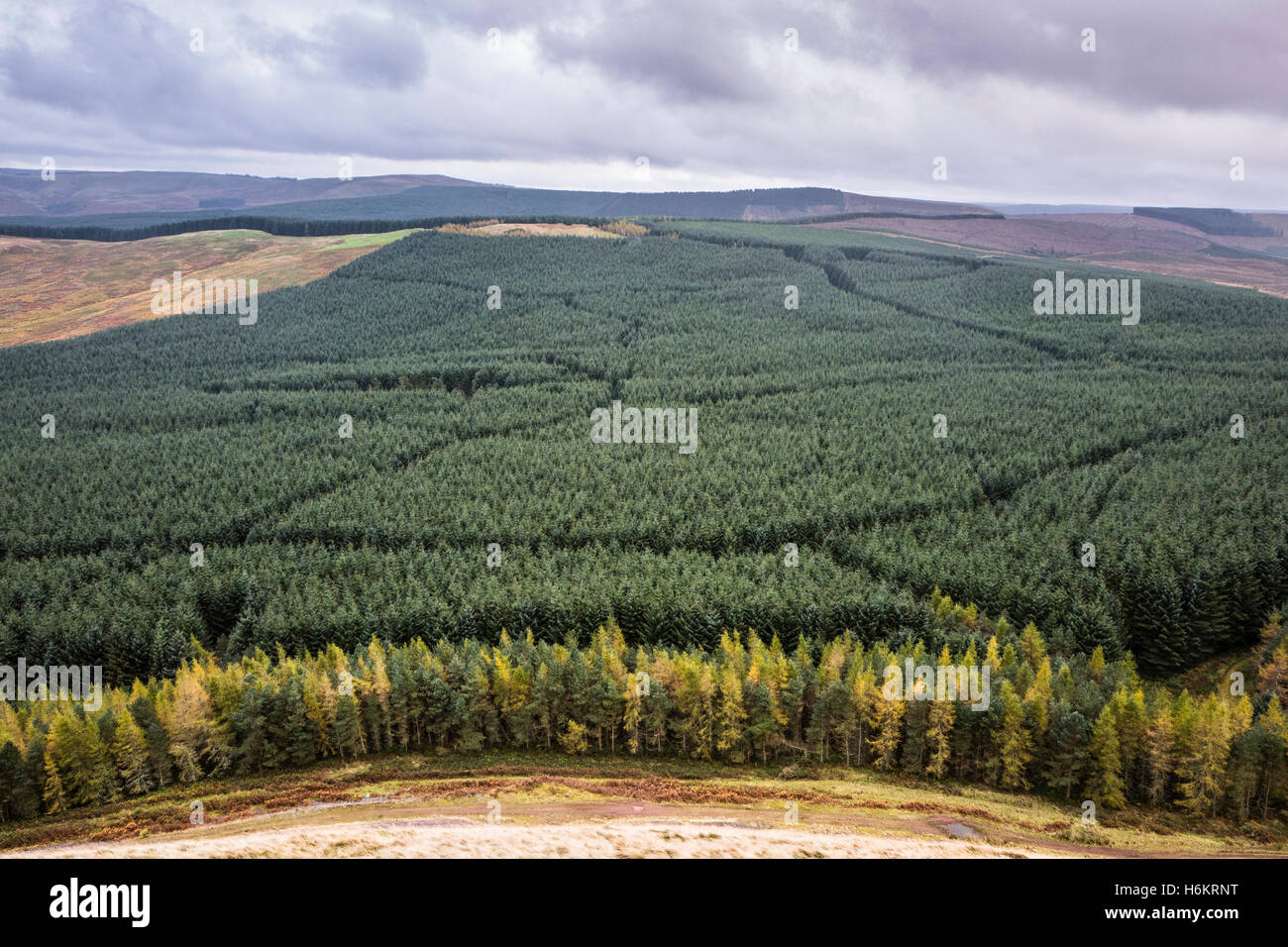 Camptown, Jedburgh, Scottish Borders, UK. 27th October 2016.  Looking south from Phillip Law (422m) at autumn colours - Stock Image