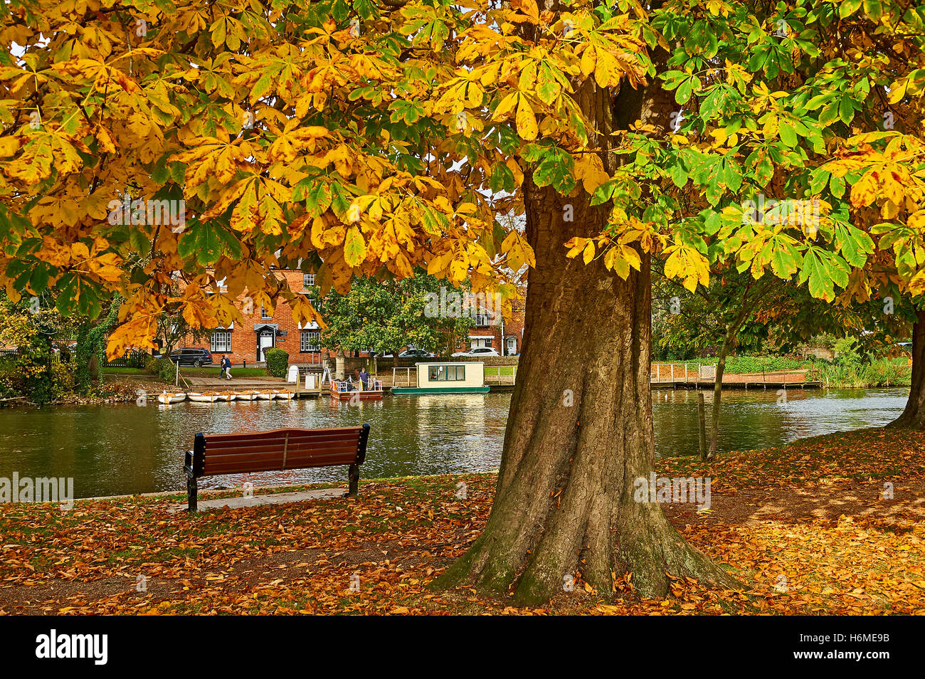 Trees in autumnal fall season colouring on the recreation ground in Stratford upon Avon - Stock Image
