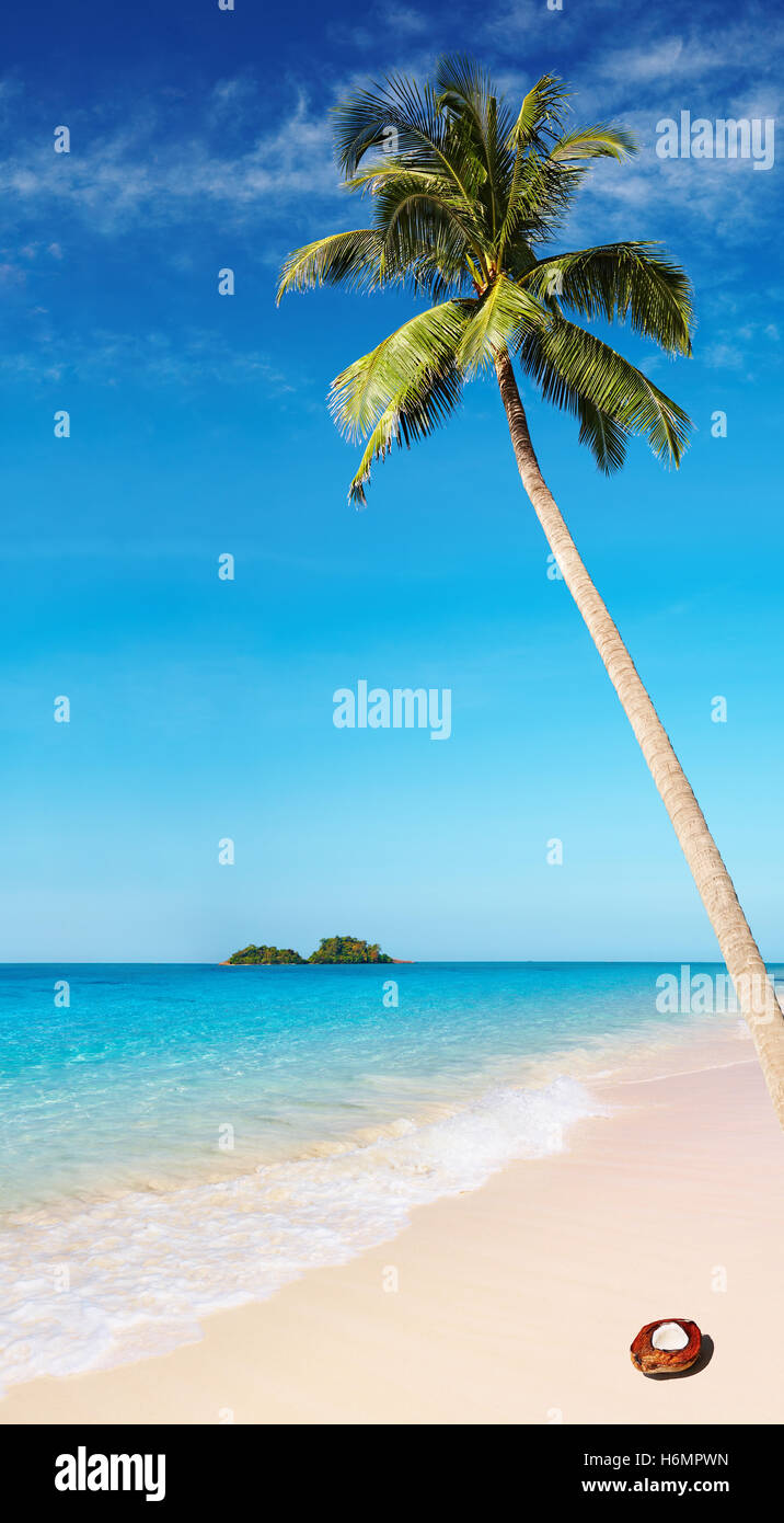 Tropical beach with palm tree and azure water - Stock Image