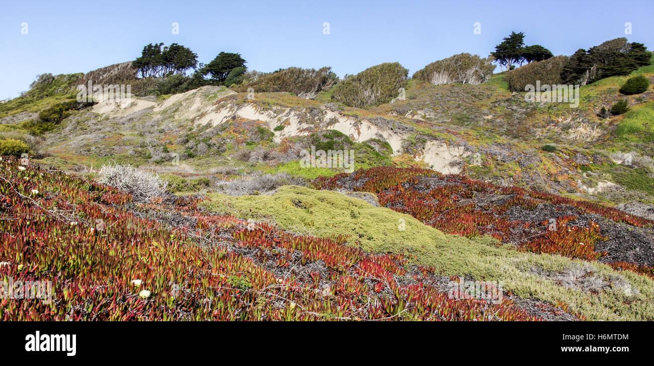 Coastal Views of the Pacific Ocean Bluffs from Fort Funston - Stock Image