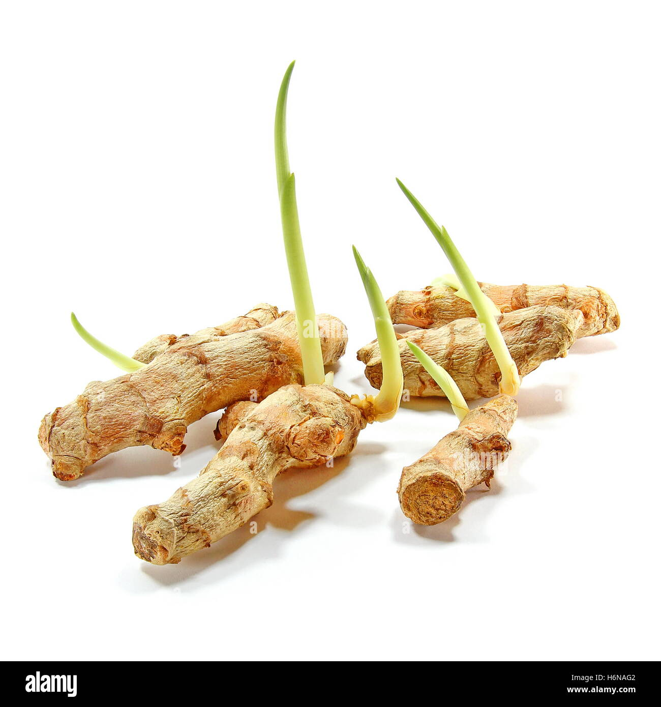 how to grow turmeric plant in india