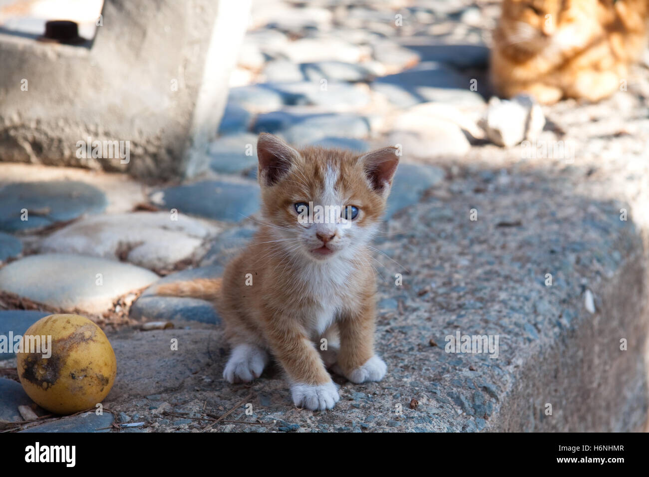 home animals - Stock Image