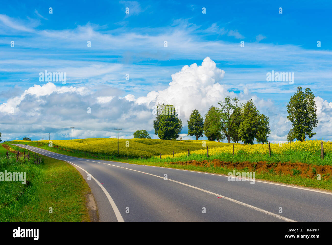 Planting of raps road - Stock Image