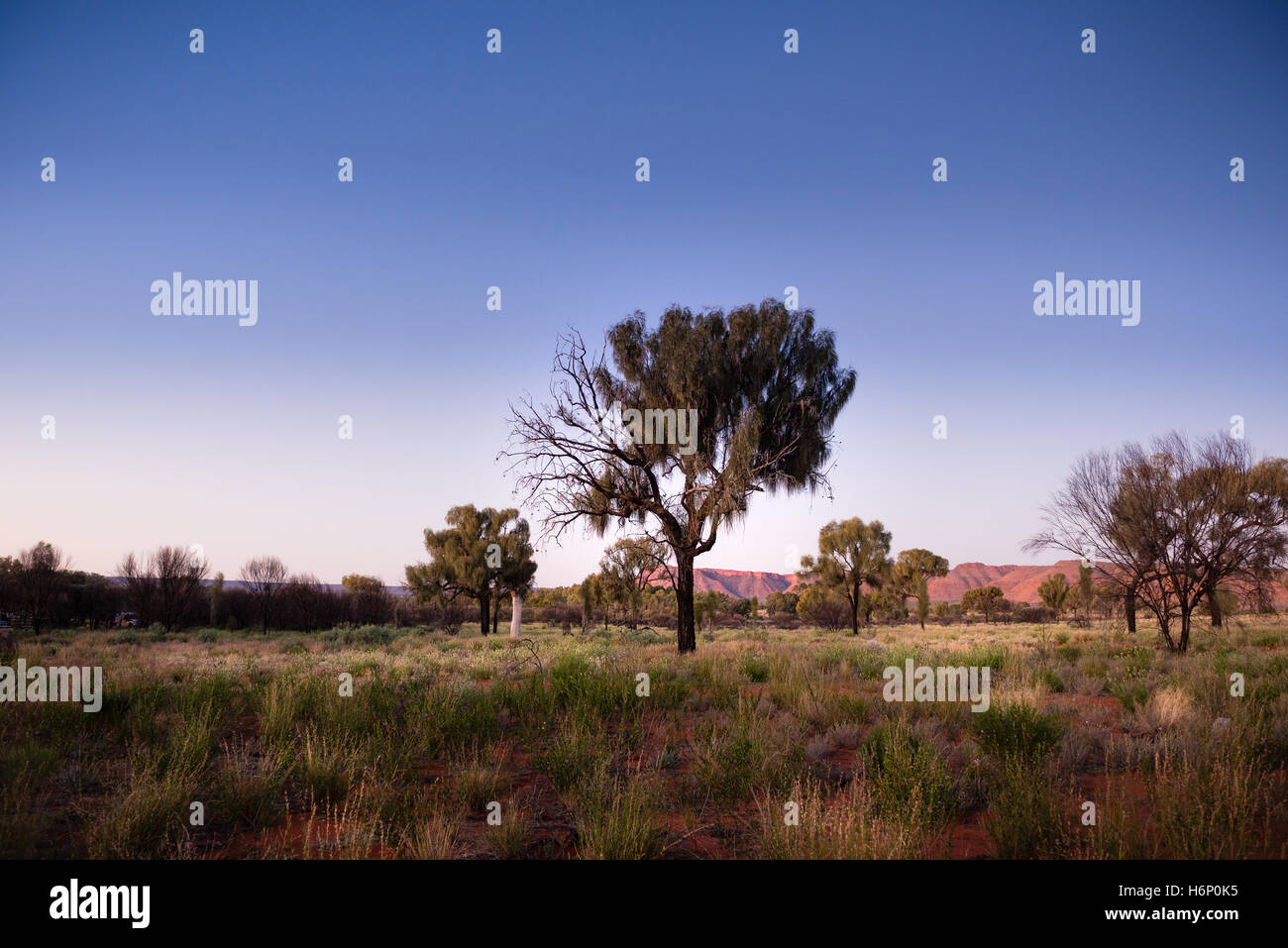 MacDonnell Ranges at sunset - Stock Image