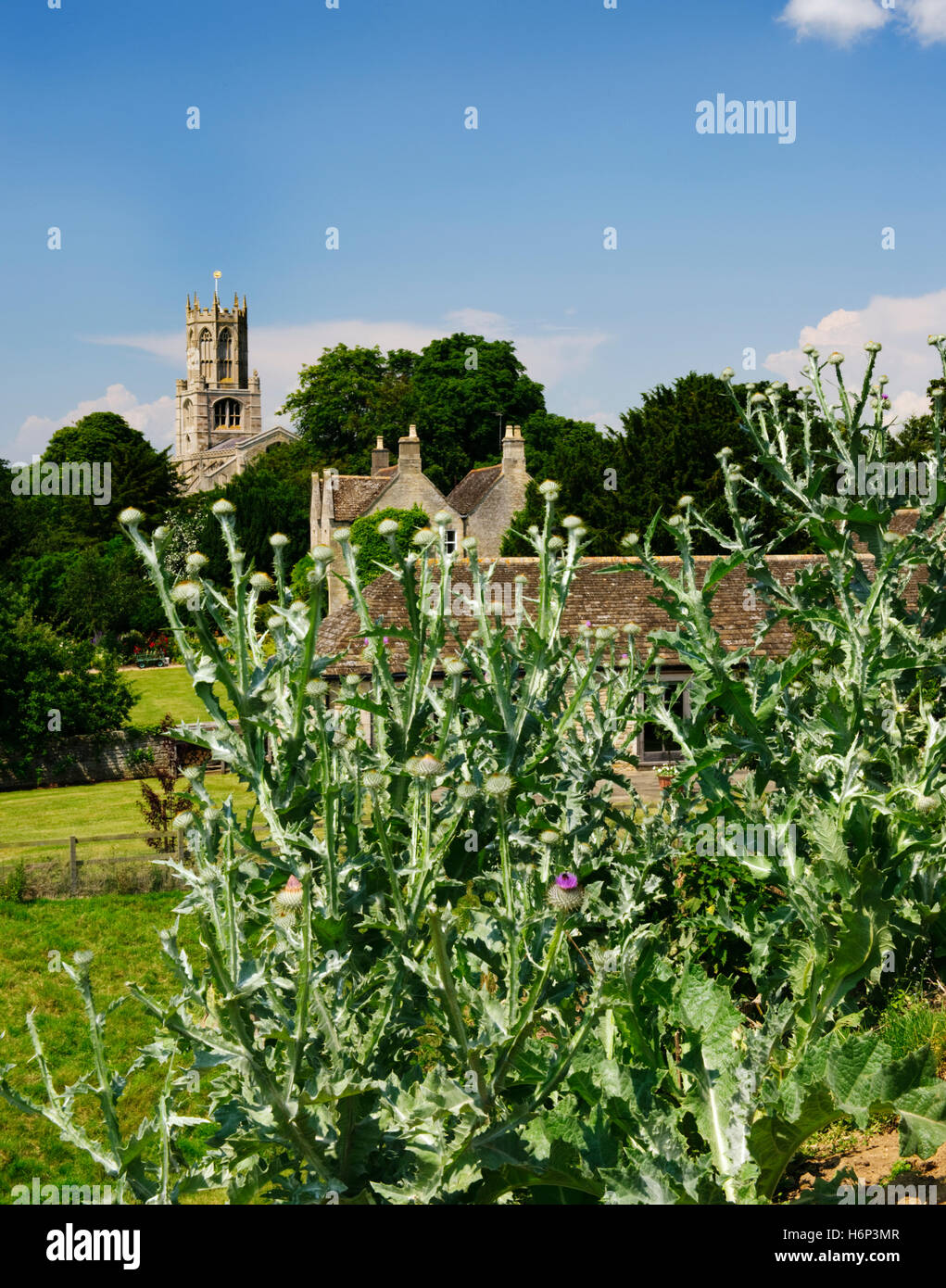 Fotheringhay C15th church, Northamptonshire, seen from the castle motte planted with Queen Mary's tears (Scotch - Stock Image
