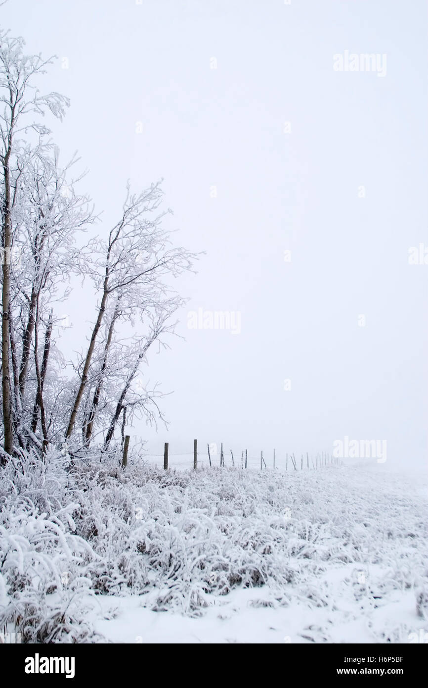 god tree horizon holiday vacation holidays vacations winter cold new field snow coke cocaine material drug anaesthetic - Stock Image
