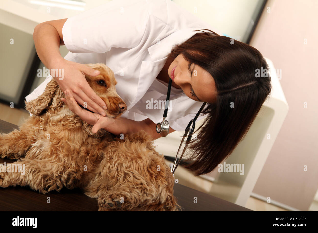 vet with dog - Stock Image