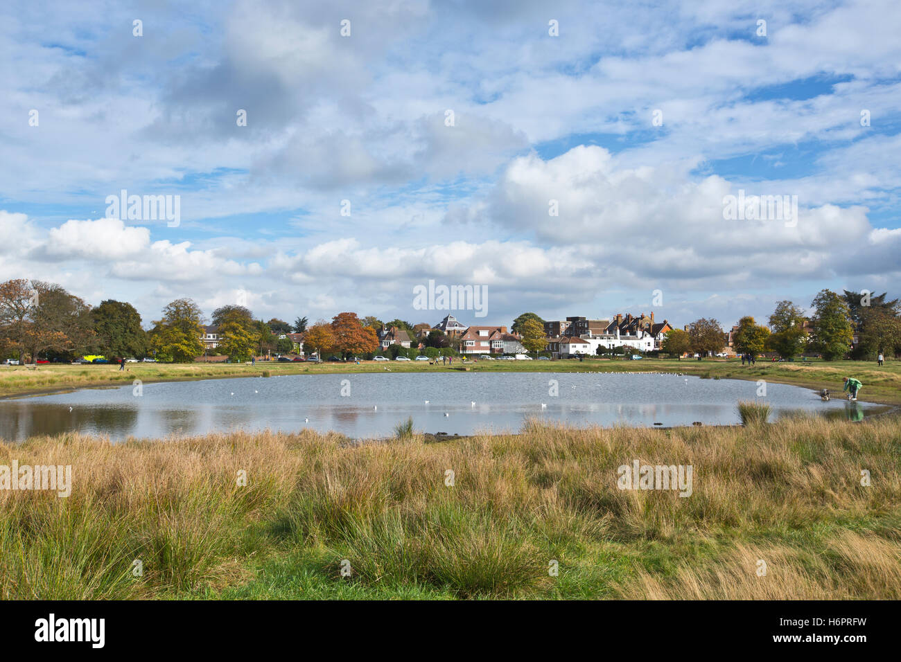 6f331fd6b12aa Rushmere Pond, Wimbledon Common, Southwest London, England, UK - Stock Image